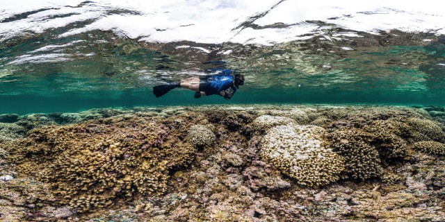 Foto: XL Catlin Seaview Survey/Global Coral Bleaching