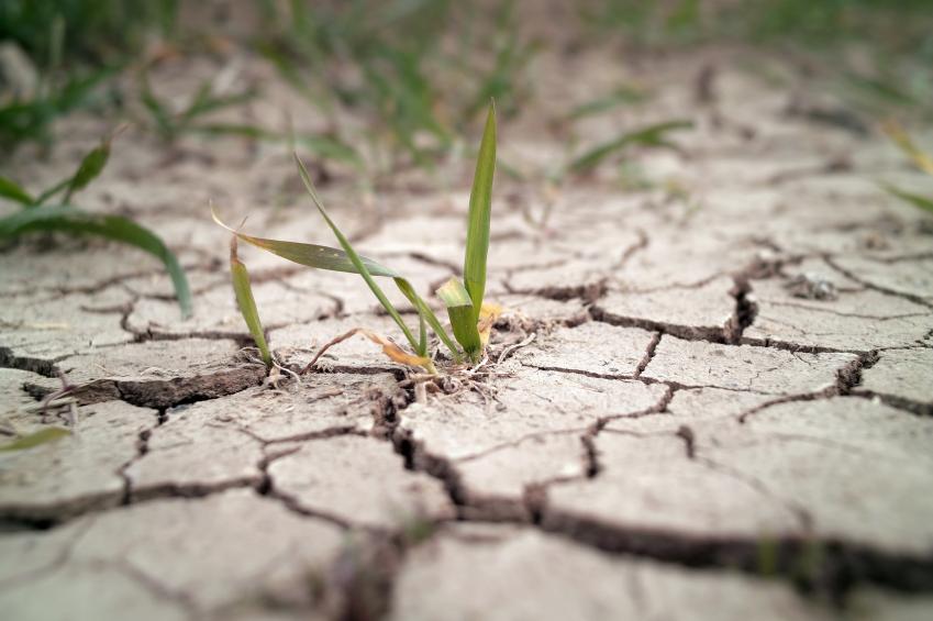 70% de Pernambuco está em estado de emergência por falta de chuva