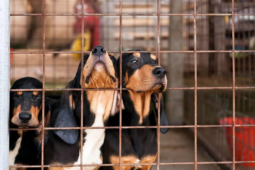 Ações em SP combatem feiras irregulares de animais