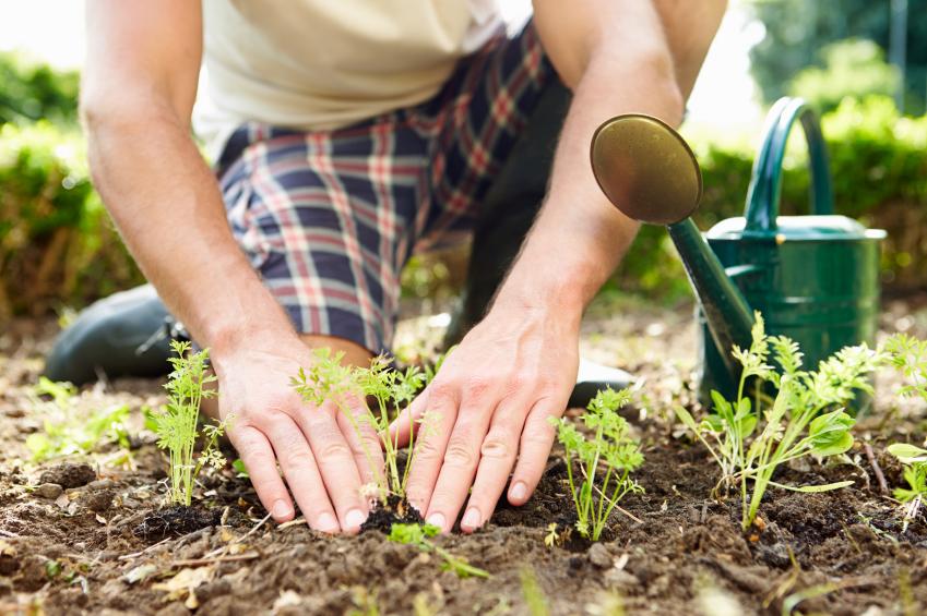13 bons motivos para começar uma horta comunitária
