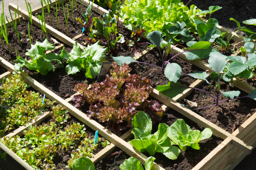 Vegetable garden with assortiment vegetables and cold container