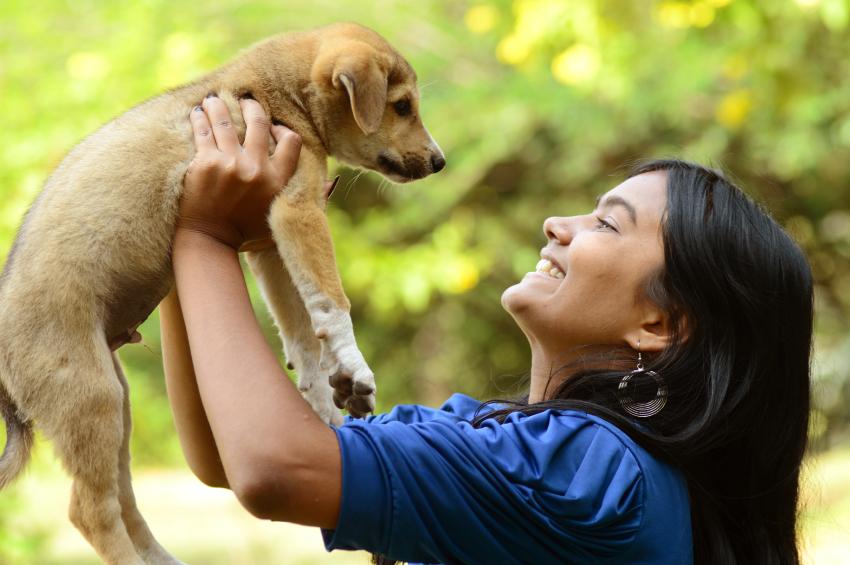 Saiba como adotar animais em São Paulo