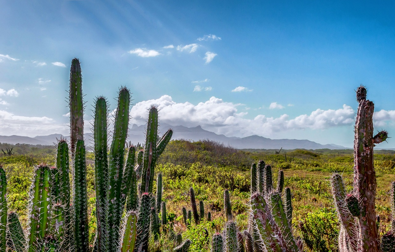 El Niño causará seca na Venezuela e aumentará racionamento de água, diz ministro