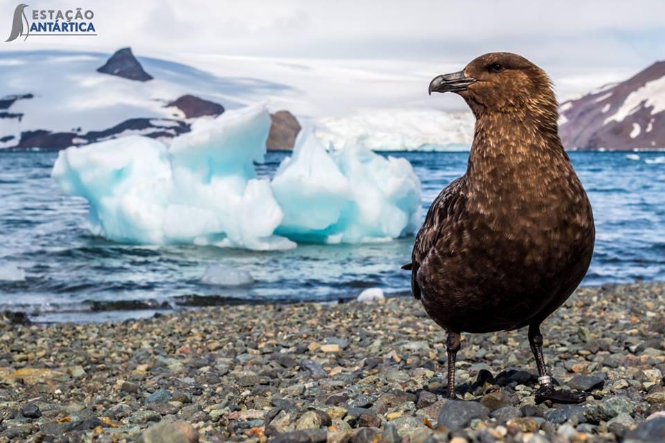 Exposição de fotos leva a beleza da Antártida ao metrô de SP