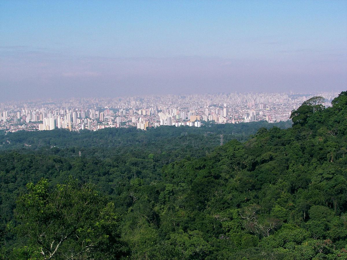 Revogação de normas ambientais pode comprometer recuperação de florestas em SP