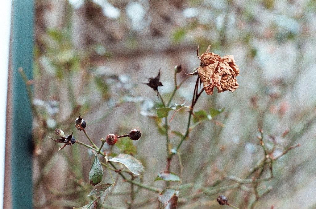 Saiba como recuperar uma planta seca