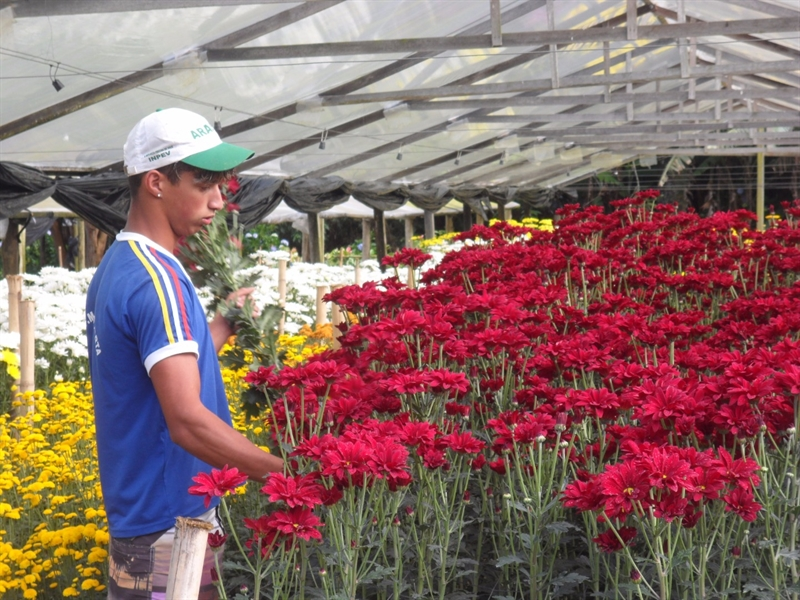 Floricultura instala sistema de compostagem e incidência de pragas diminui