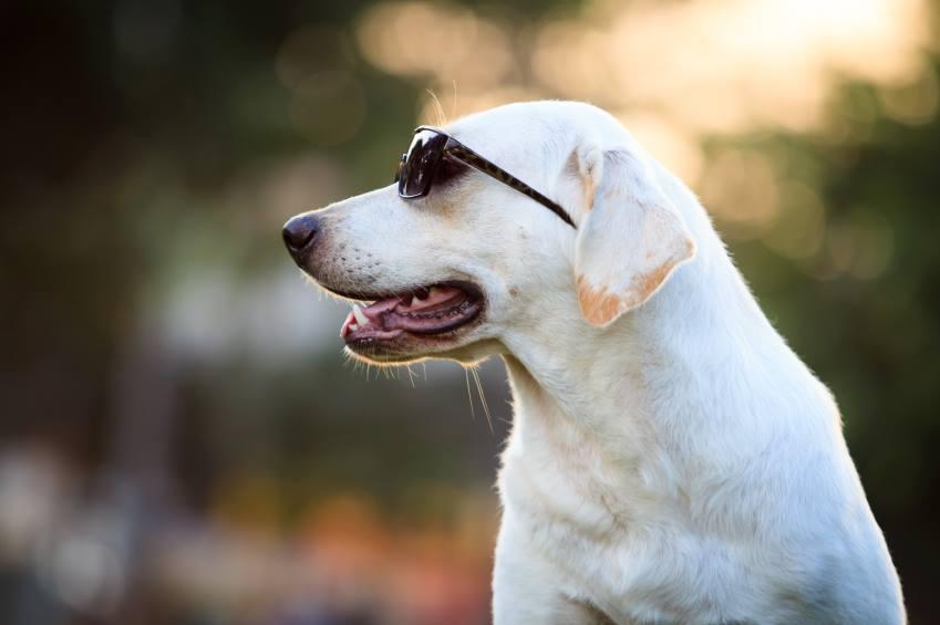 6 dicas para cuidar do seu PET no verão