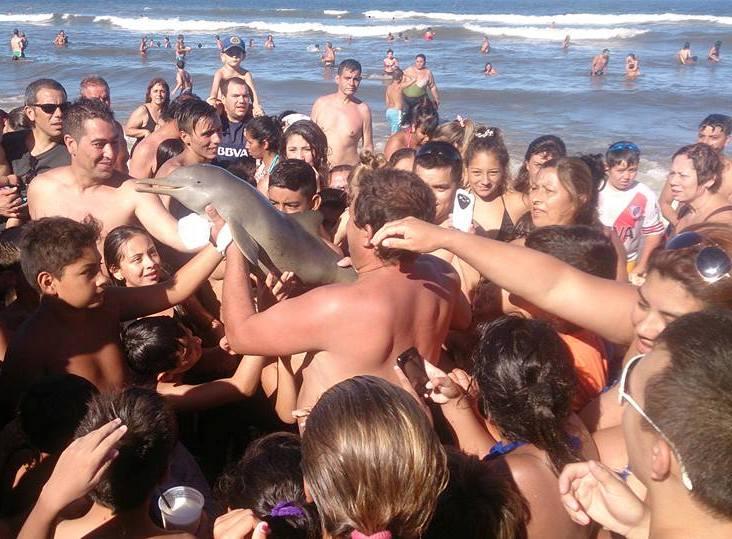 Foto de golfinho cercado por turistas gera polêmica nas redes sociais
