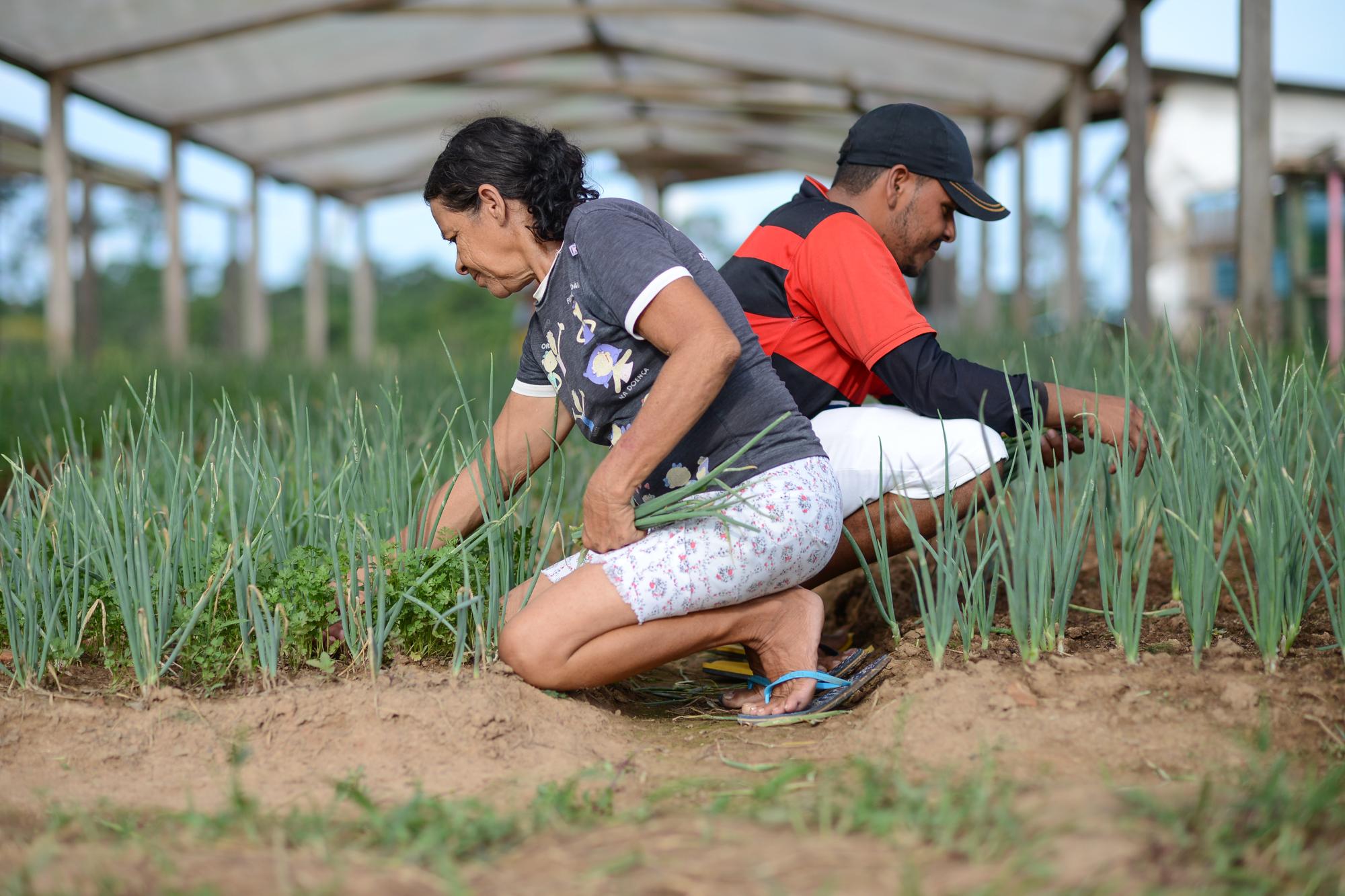 Governo aprova decisão que promove a agricultura familiar