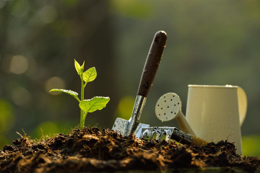 18 cursos ambientais gratuitos que acontecem em março