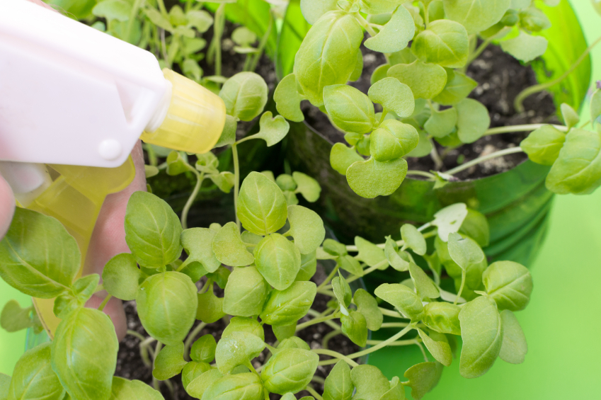 Cartilha ensina 16 receitas caseiras para controlar pragas na horta