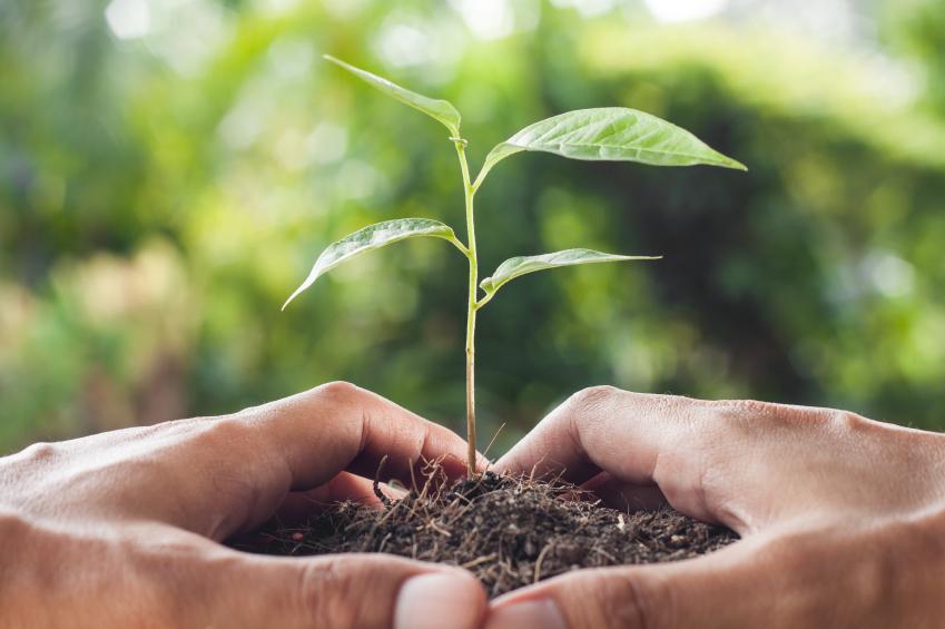 Alphaville tem cursos gratuitos de formação para Agentes de Sustentabilidade