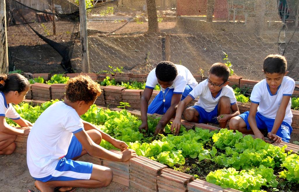 Escolas em Palmas ensinam alunos a plantar alimentos orgânicos