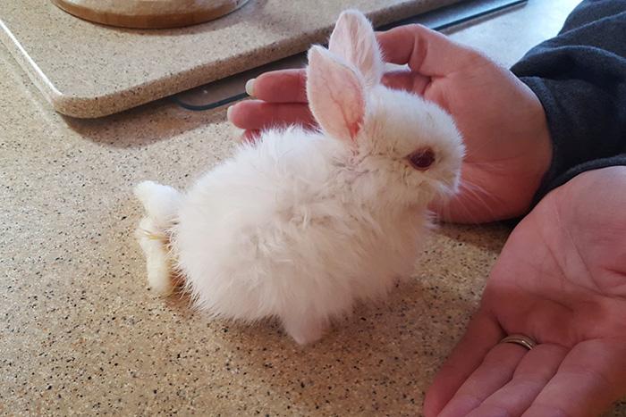 paralyzed-bunny5