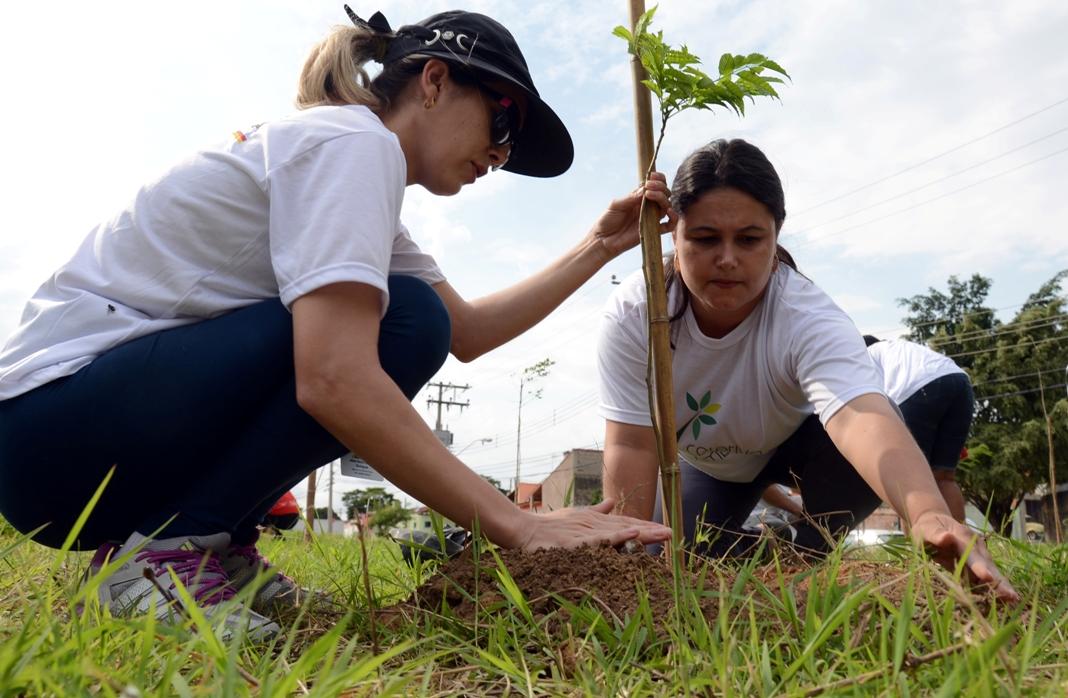 Universitários trocam trote tradicional por plantio de árvores em SP