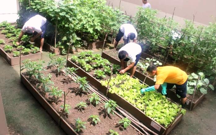 Presos no Amazonas cultivam horta para garantir os próprios alimentos