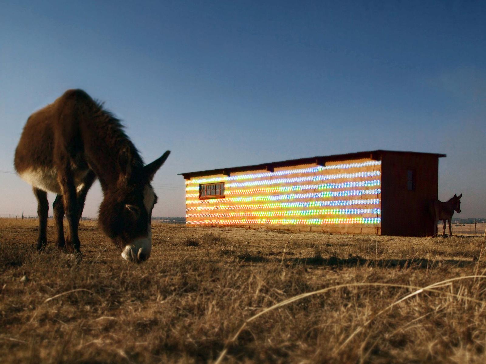 Sul-Africano reaproveita 1.000 CDs para fazer intervenção artística