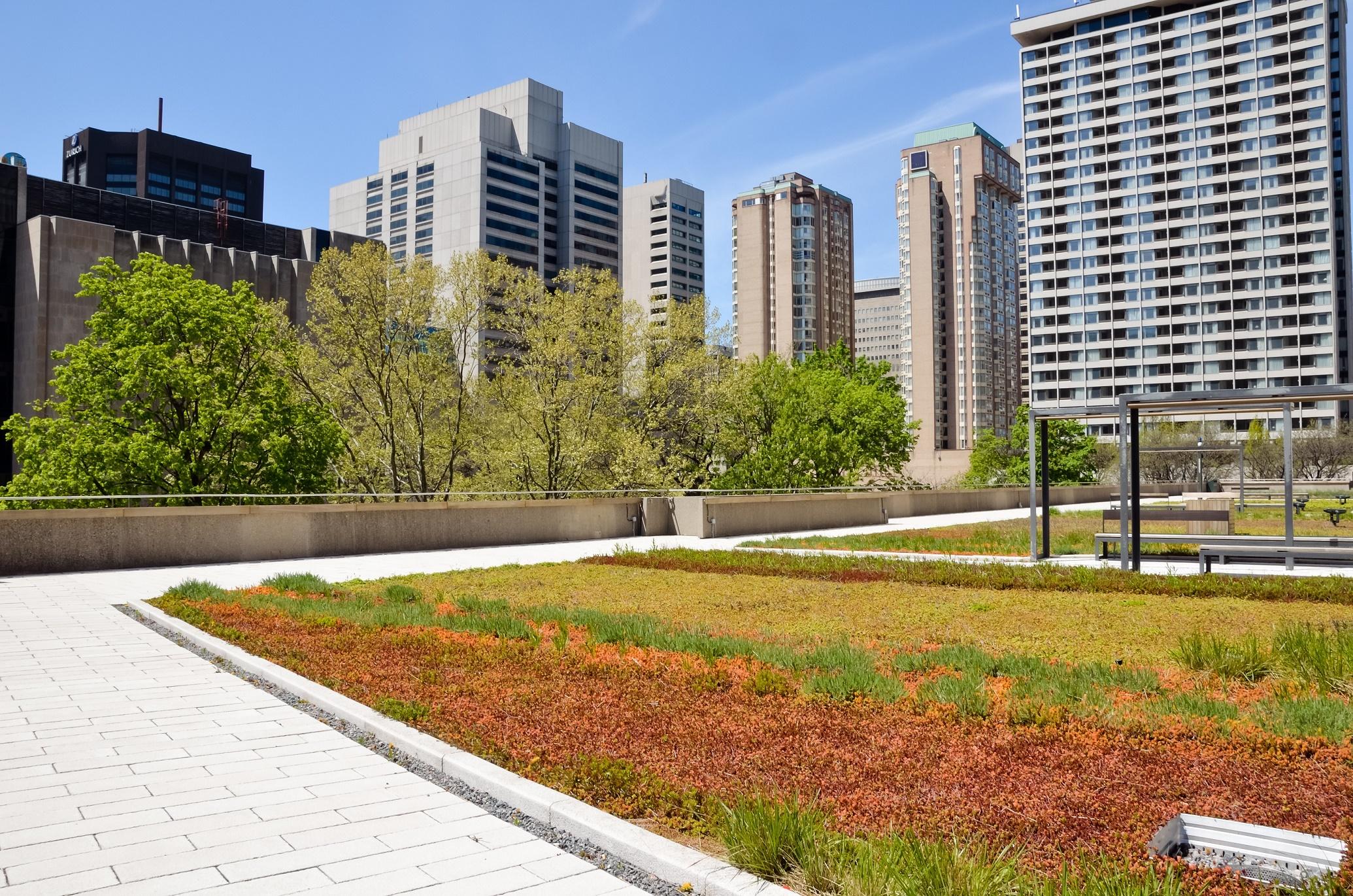 telhado verde (1)
