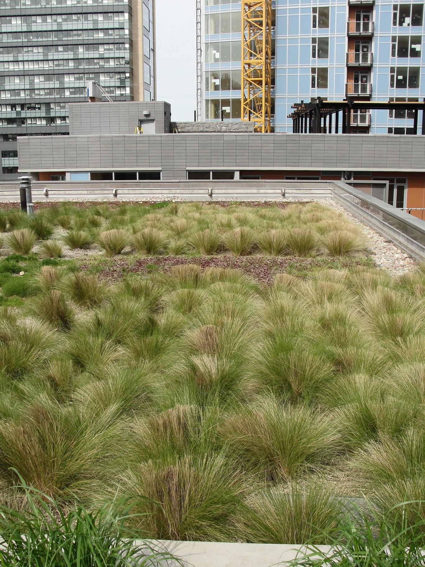 telhado verde (2)