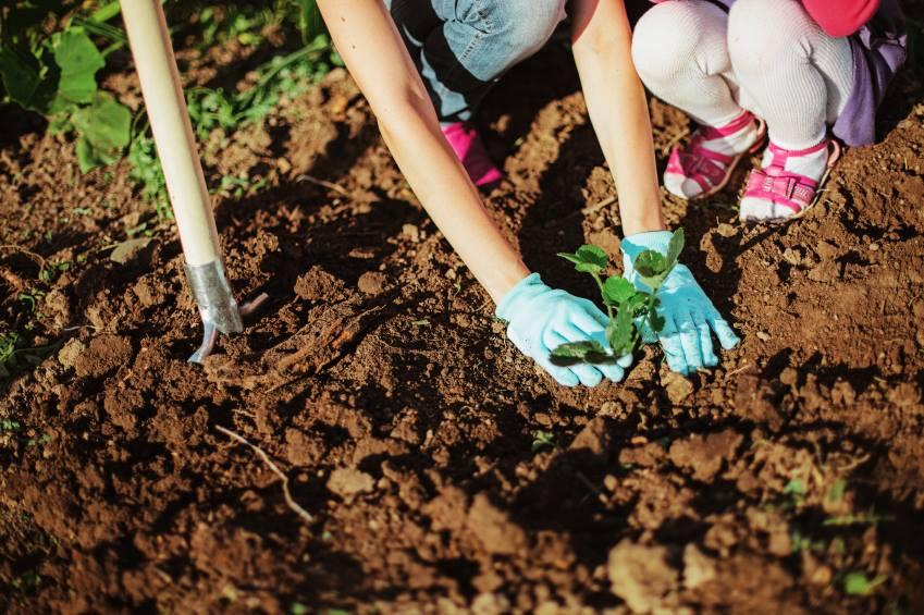 RJ tem oficina grátis de horta orgânica para comemorar mês das crianças