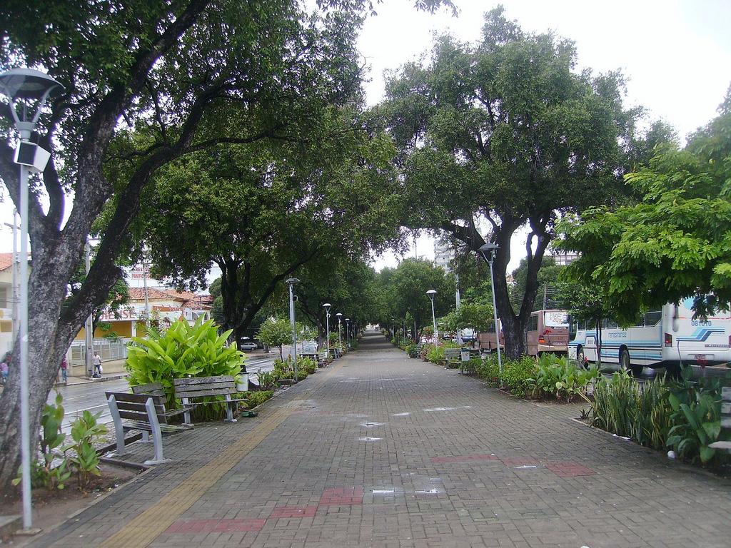 Apenas neste ano, a cidade de Teresina já ganhou 4 mil novas árvores