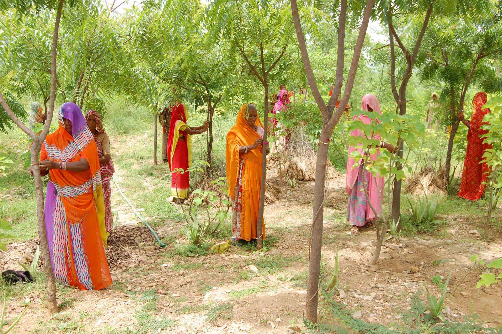 Aldeia indiana comemora cada nascimento de meninas com plantio de 111 árvores