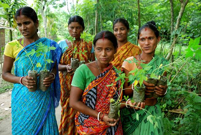 Women-with-saplings-West-Bengal-India.jpg.650x0_q70_crop-smart