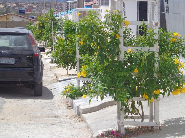 Campina Grande, na Paraíba, quer ter duas árvores para cada habitante