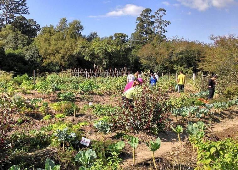 PL tenta impedir que horta comunitária seja destruída em Porto Alegre