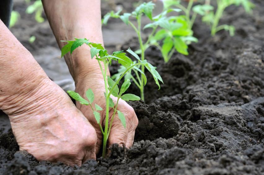 SP tem mini-curso grátis de horta caseira e comunitária