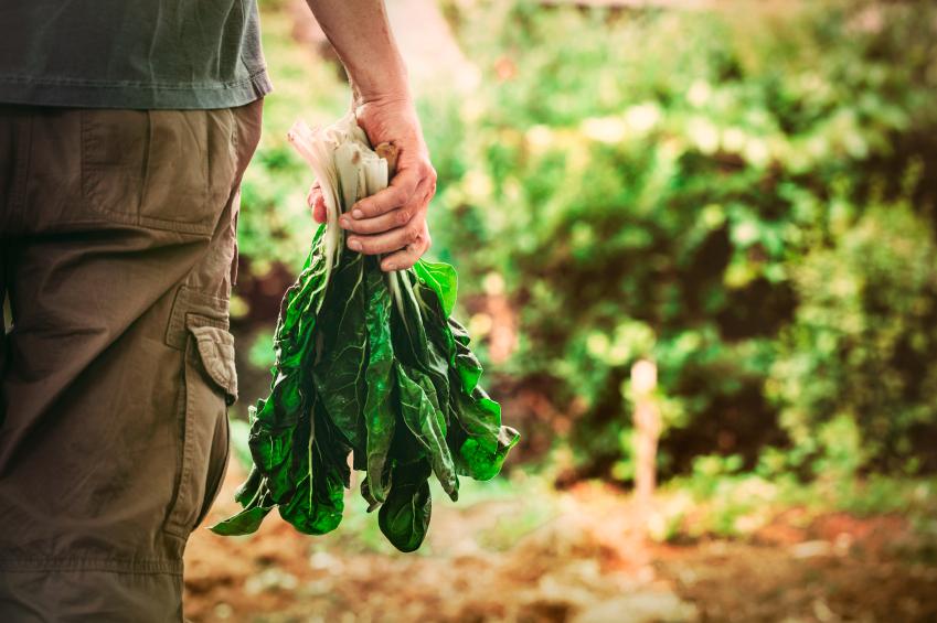 Curso ensina a produzir e comercializar alimentos orgânicos