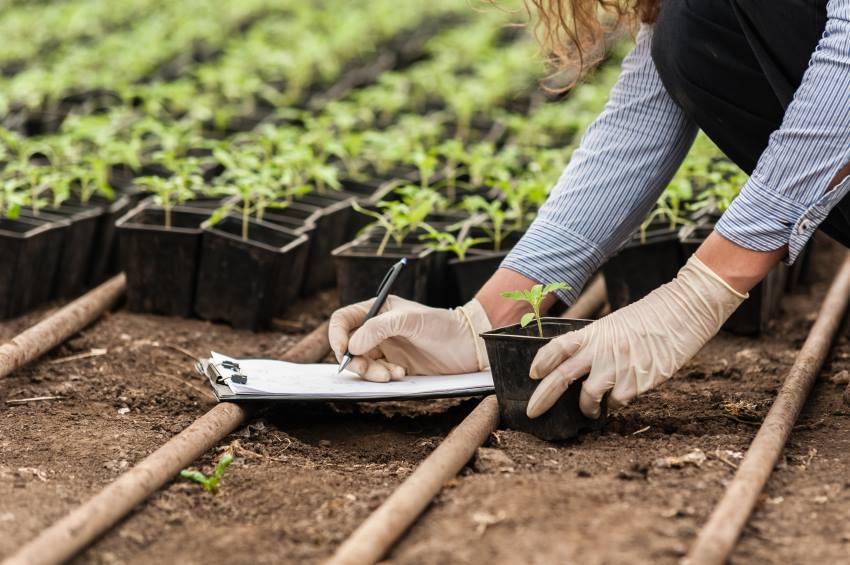 Entenda como a produção de mudas pode revolucionar a agricultura