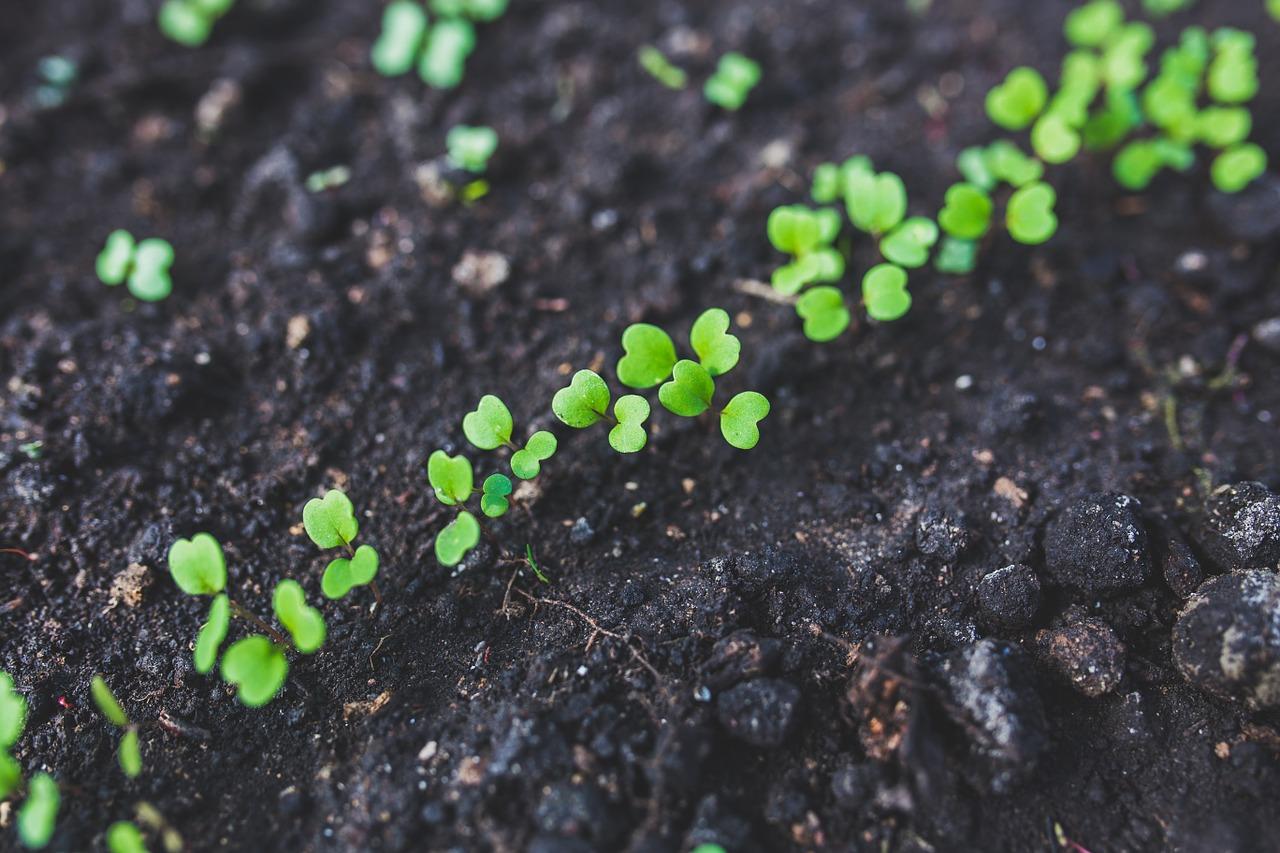 Oficina grátis em SP ensina como fazer uma sementeira