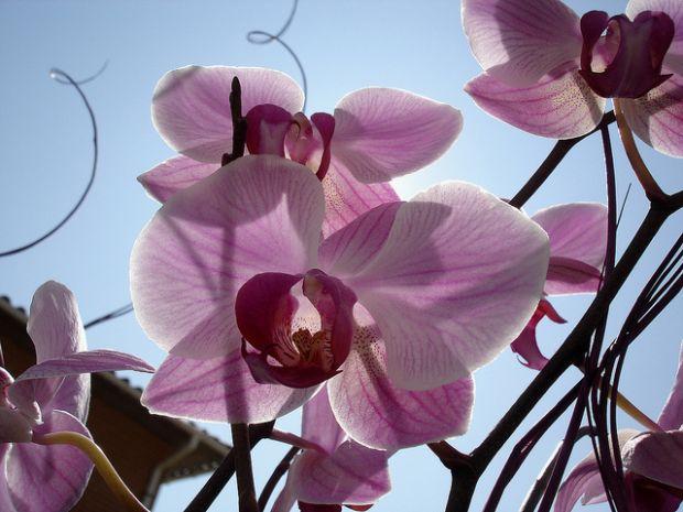 Shopping em SP realiza feira de orquídeas com preços acessíveis