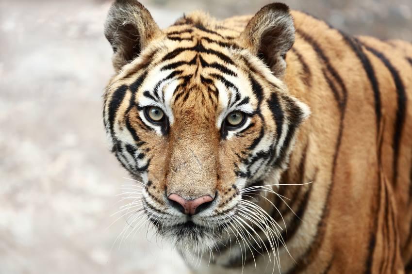 50% de todas as espécies podem ser extintas até 2100