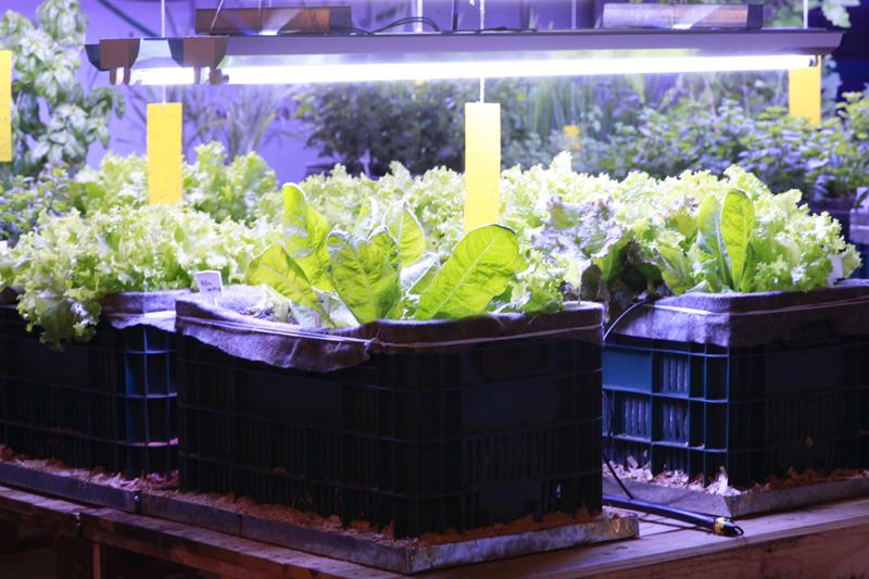 Edifício em SP cria horta subterrânea para aproveitar resíduos orgânicos