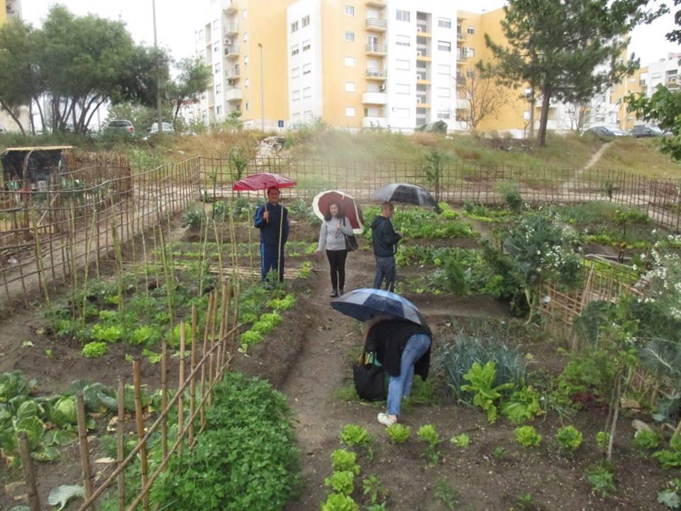 mini jardim jornal hoje : mini jardim jornal hoje:Terreno que abrigava drogas e prostituição vira horta comunitária