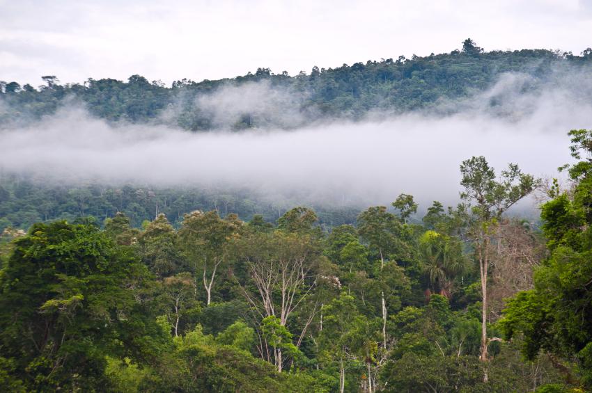 ONU abre inscrições para curso sobre gestão responsável de recursos naturais