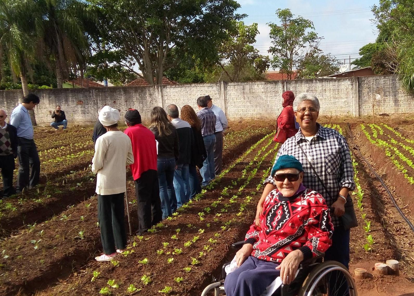 Asilo ganha horta que produzirá 15 tipos de alimentos e tem 3 mil pés de abacaxi