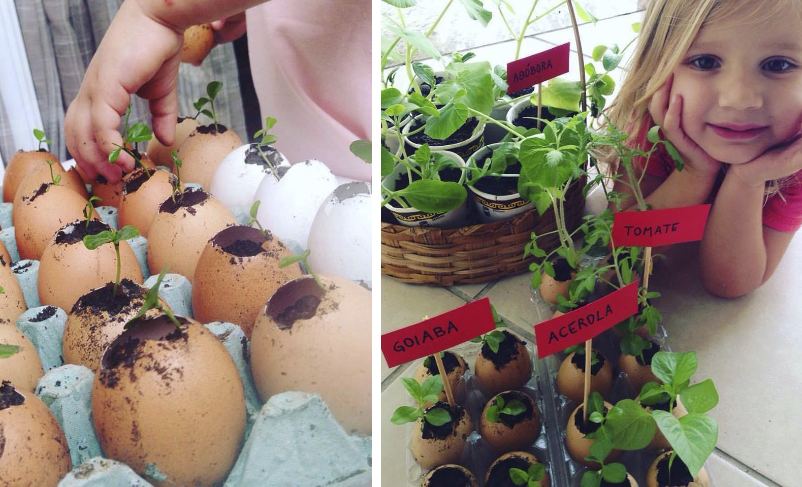 Mãe e filha produzem mudas em cascas de ovos e as doam nas ruas