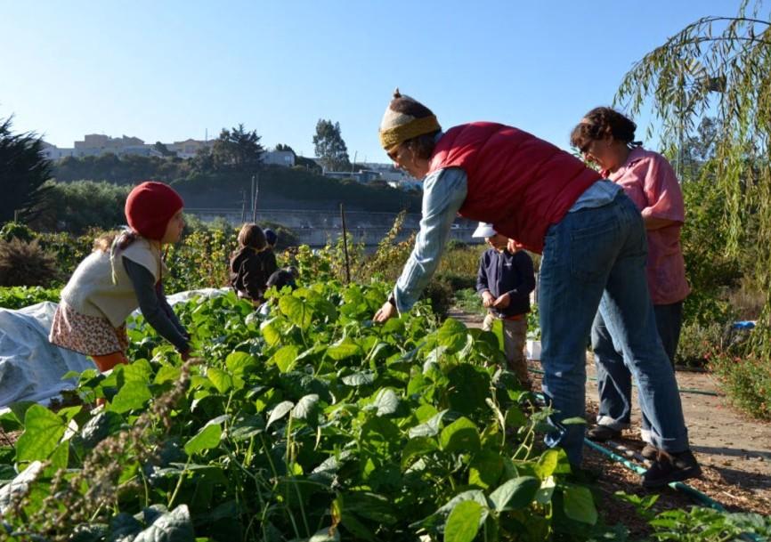 1a escola agrícola urbana dos EUA está sendo construída na Califórnia