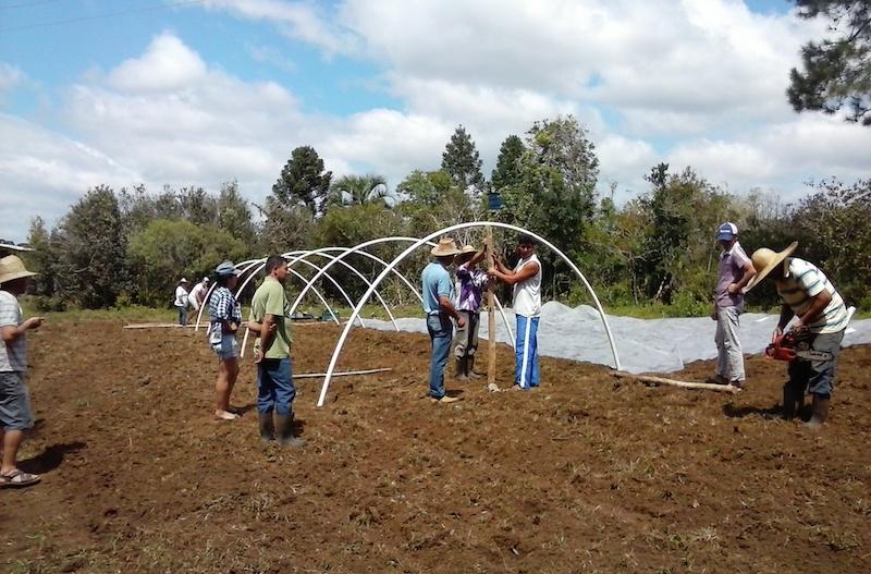 Projeto cria plataforma para valorizar agricultura familiar orgânica