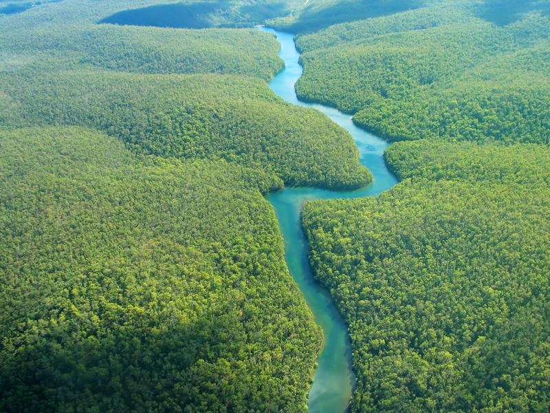 São necessários 300 anos para catalogar todas as árvores da Amazônia, diz estudo