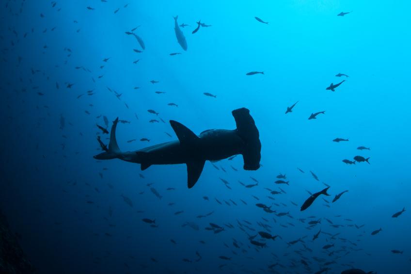 Brasil tem mais de 200 espécies de peixes que podem desaparecer