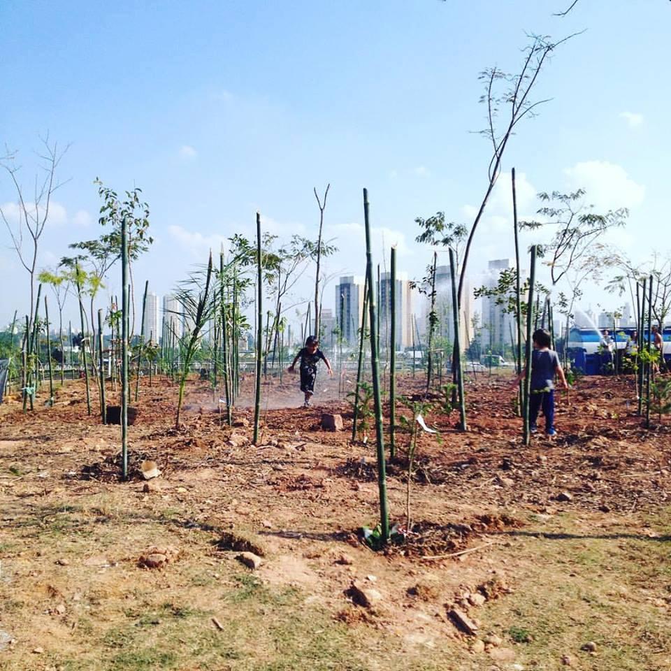 Com mutirão e 500 voluntários, SP ganhou mais uma mini-floresta