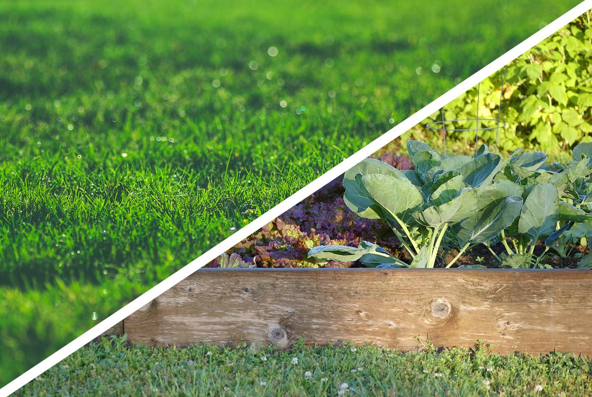 7 razões para trocar seu gramado ou quintal por uma fazenda urbana