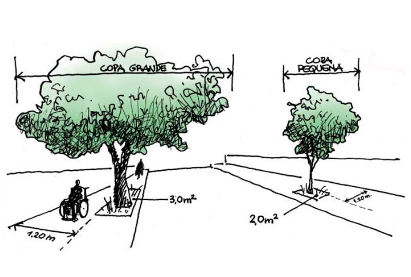 8 árvores ideais para plantar em calçadas
