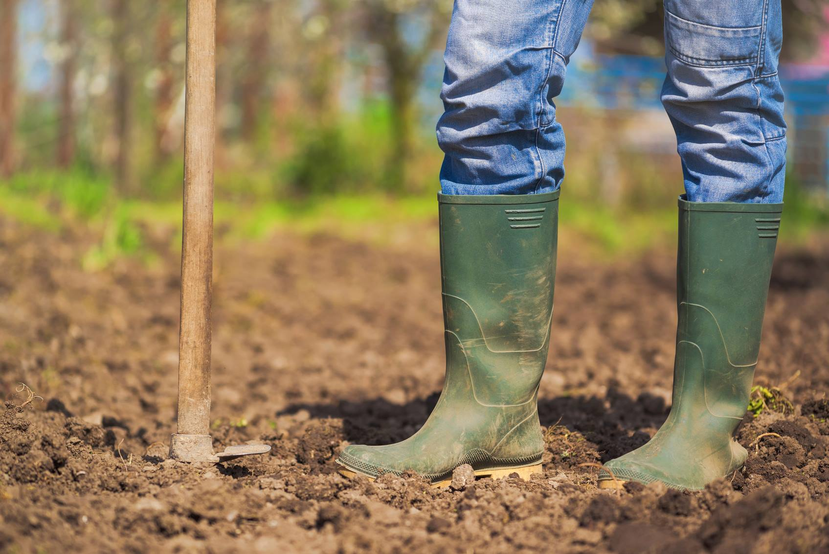 Entenda como deve ser feita a adubação verde e a rotação de culturas