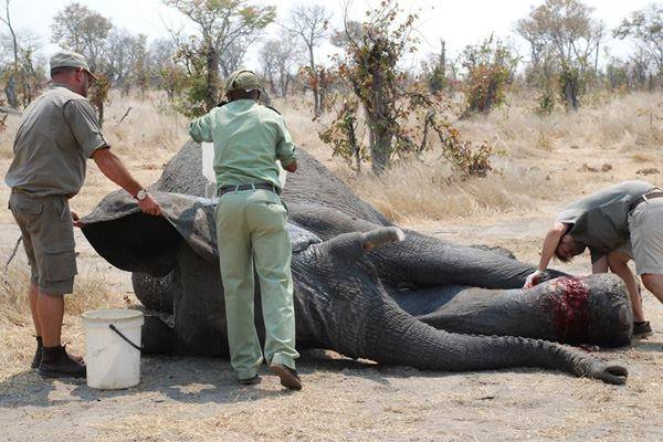 Foto: Elephants Without Borders